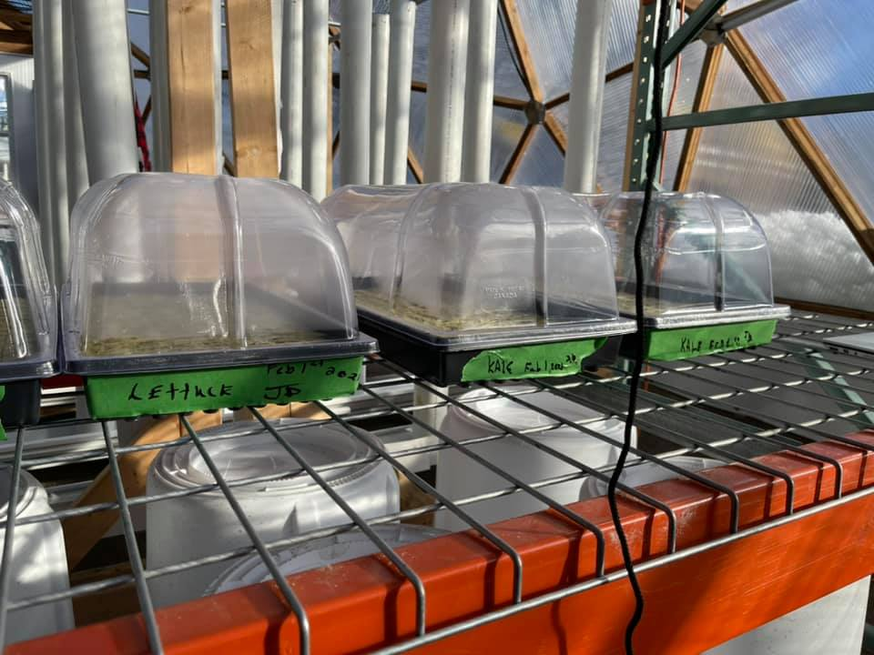 seed trays in grow dome